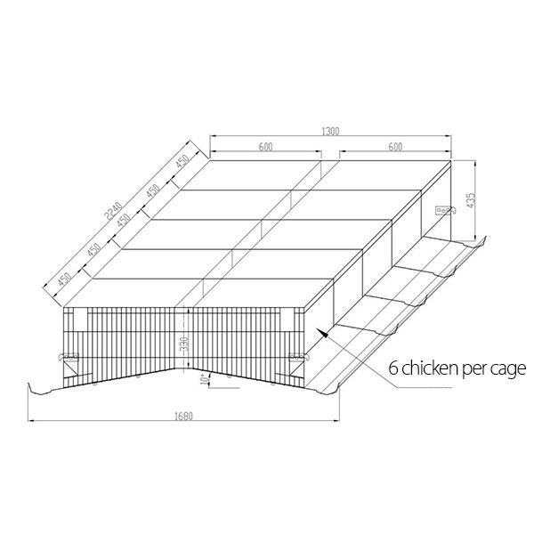 6 Chicken per cage