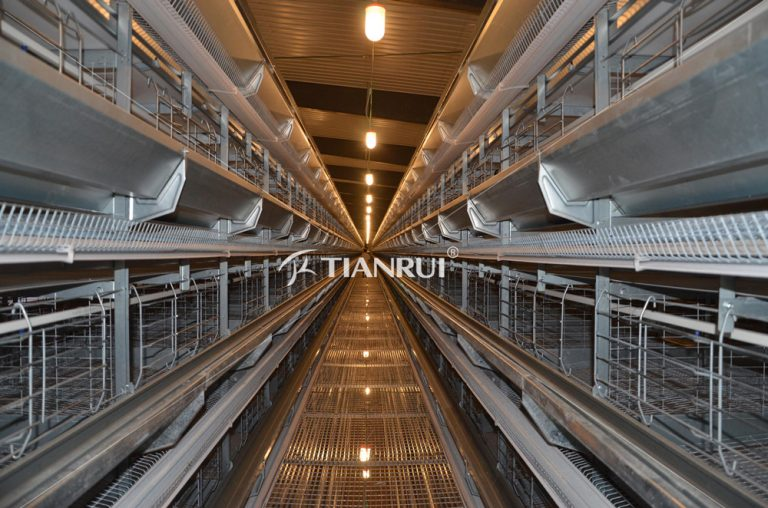 Farming Port sets up 100,000-layer chicken cage in Djakarta India