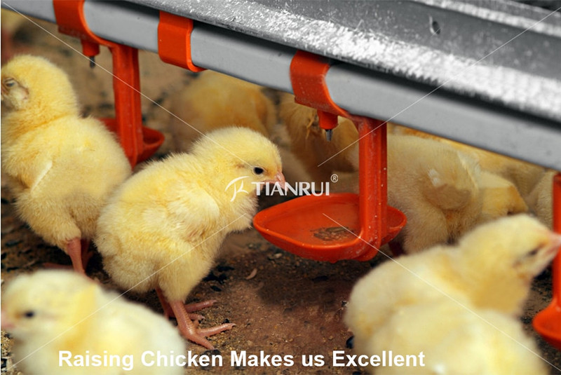 Please do these preparations for baby chicken cage before pullet arrive in!