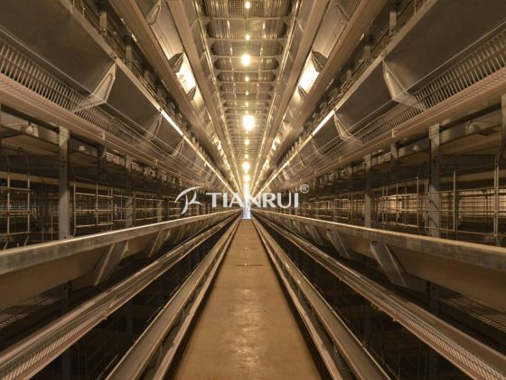 Poultry Chicken Battery Cage is the best poultry rearing system or not