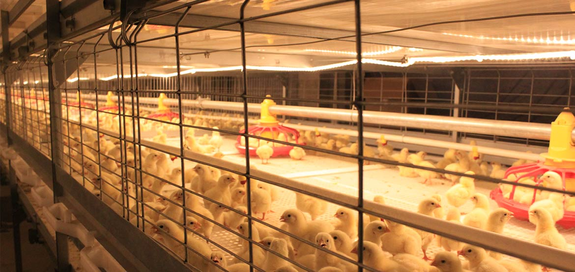 automatic-broiler-img