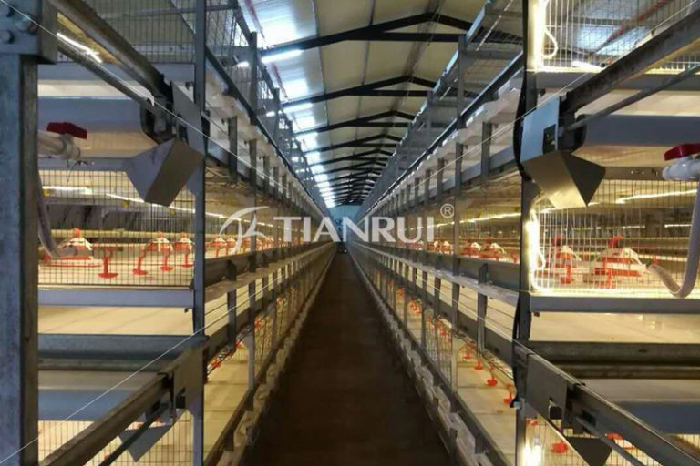 poultry-house-ventilation-automatic-chicken-layer-cage-sale-philippines