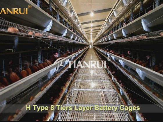 prepare-battery-chicken-farm-business