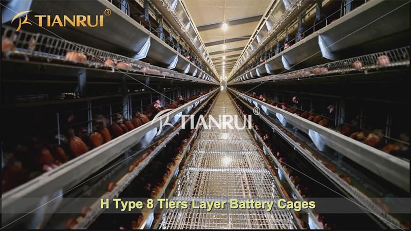 prepare-battery-chicken-farm-business