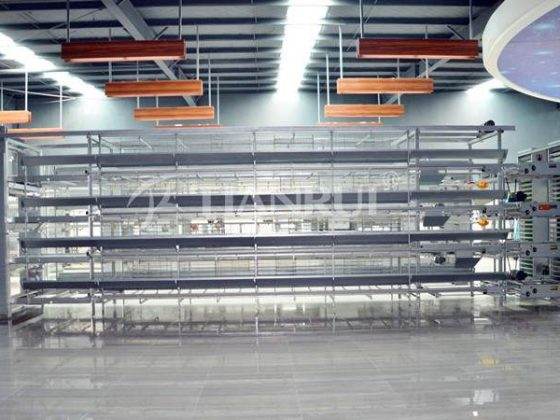 tiantui-automatic-poultry-equipment-modern-poultry-farming-operations